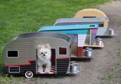Pets allowed in the campsite
